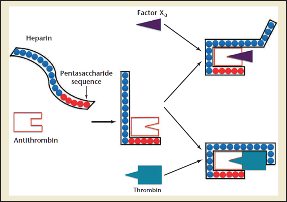 heparin physiology pharmacology and clinical application