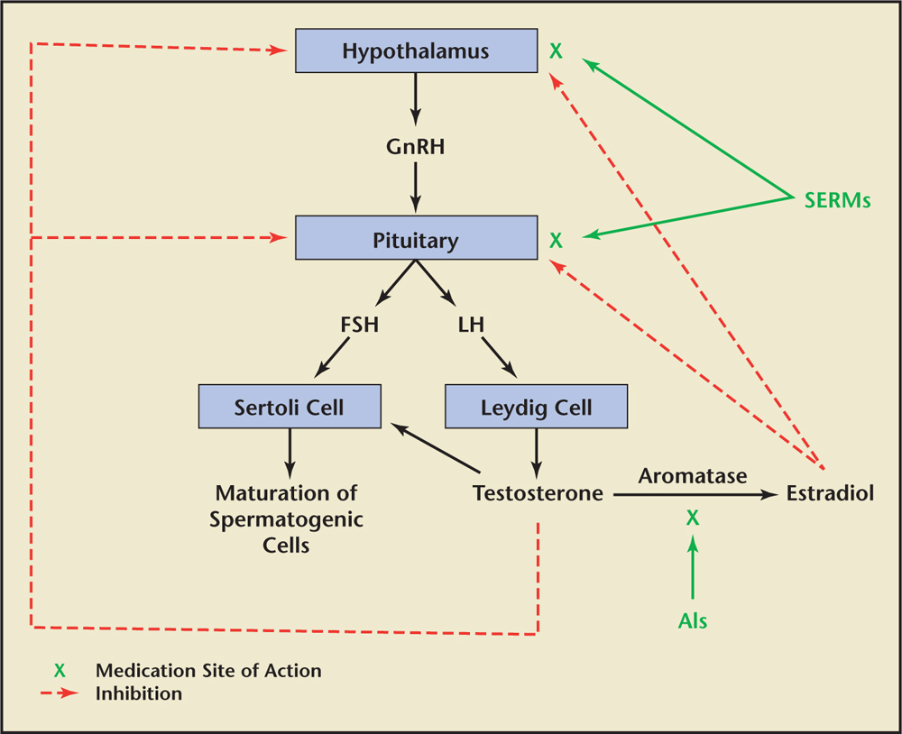 estrogenic effects of enclomiphene