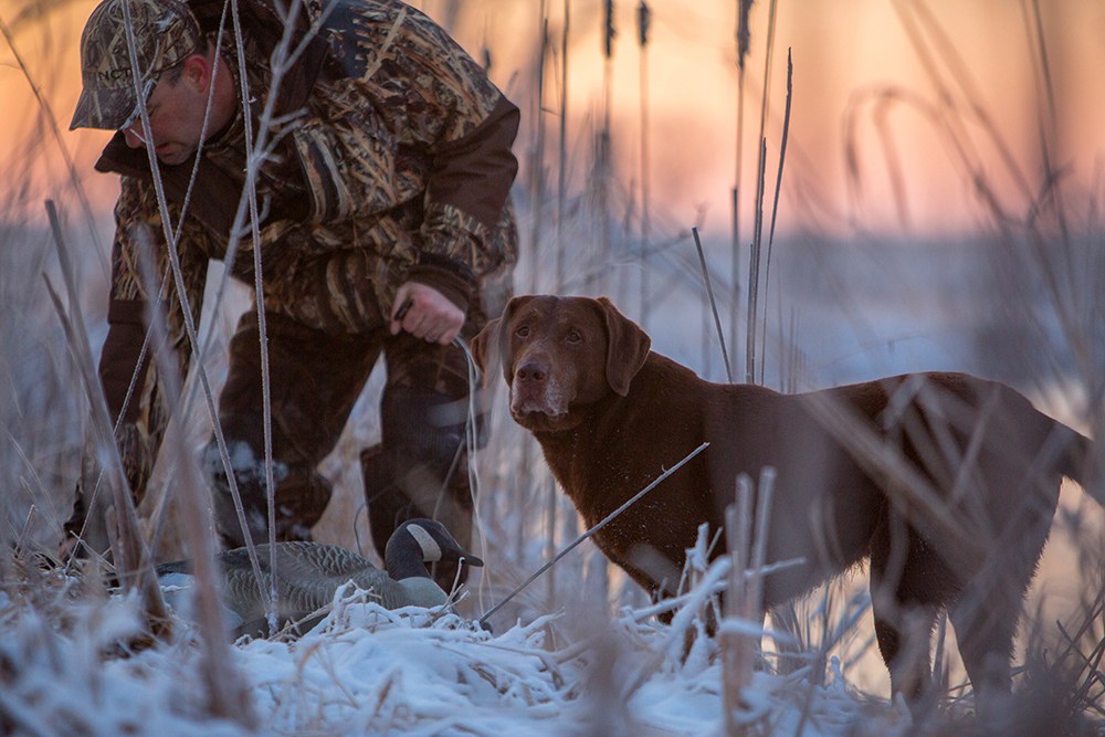 Aiming For Quality: The Inaugural Hunt with HEVI-Shot at the Soggy